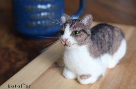 香箱座りの猫ちゃん